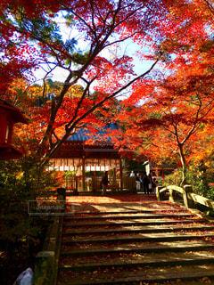 鍬山神社の紅葉の写真・画像素材[1612453]
