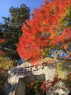 苗秀寺の紅葉の写真・画像素材[1641568]