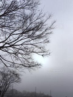風景,空,秋,屋外,白,田舎,霧,シルエット,白い,樹木,朝,ホワイト,京都府,朝霧,濃霧,盆地,南丹市,白い霧,濃霧注意報