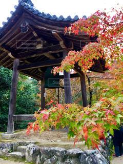 西明寺の紅葉の写真・画像素材[1675481]