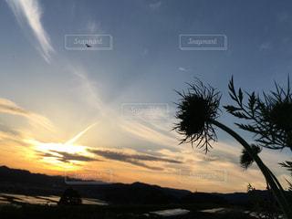 夕焼け空に 人参の花のシルエットの写真・画像素材[1863748]