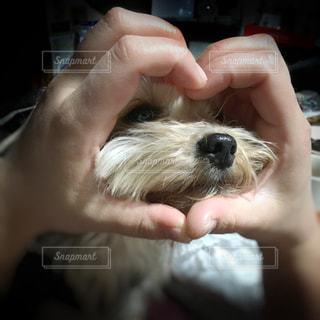 ハートの中の犬の写真・画像素材[2007754]