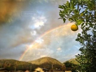 果樹と虹の写真・画像素材[3371348]