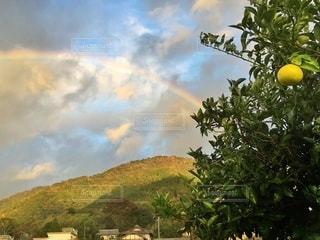 虹の写真・画像素材[3371349]