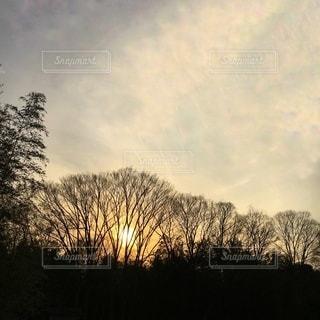 沈む夕日と空   樹木のシルエットの写真・画像素材[3380409]