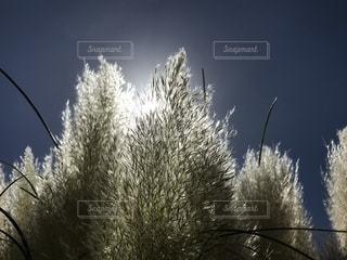自然,風景,空,屋外,鮮やか,光,ポジティブ,草木