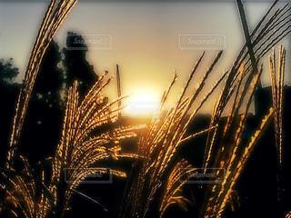 琵琶湖の秋の写真・画像素材[1597590]