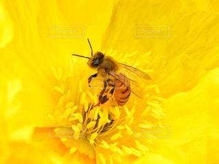 花とミツバチの写真・画像素材[1824603]