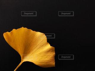 秋,黒,葉っぱ,黄色,イチョウ,銀杏,yellow,leaf,ワンポイント