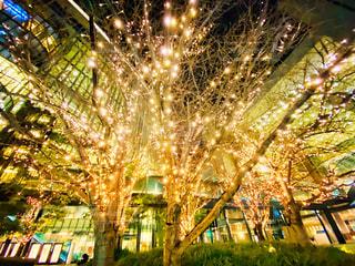 建物,夜景,樹木,イルミネーション,大阪駅,LED,グランフロント大阪,シャンパンゴールド,GRAND FRONT OSAKA