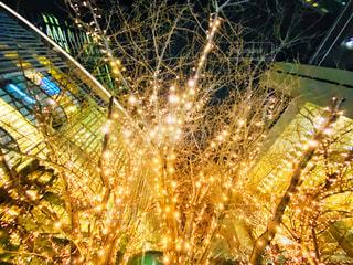 夜,夜景,屋外,樹木,イルミネーション,大阪駅,LED,電飾,グランフロント大阪,シャンパンゴールド,GRAND FRONT OSAKA