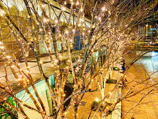 夜景,光,樹木,イルミネーション,大阪駅,LED,電飾,グランフロント大阪,シャンパンゴールド,GRAND FRONT OSAKA,うめきたSHIP