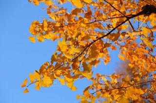 近くの木のアップの写真・画像素材[1642673]