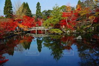 空,橋,紅葉,京都,水面,池,景色