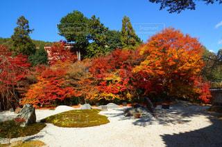 紅葉,京都,景色