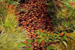 紅葉,京都,水面,景色