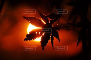 暗闇の中で爆発する花火の写真・画像素材[1612117]