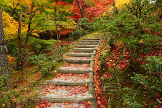 京都の紅葉の写真・画像素材[2740979]