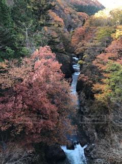 自然,秋,渓谷,渓流,峡谷