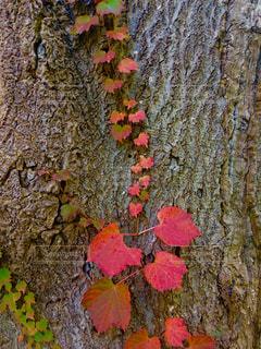 近くの木のアップの写真・画像素材[1598794]