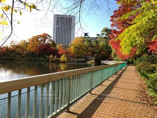 自然,空,公園,秋,紅葉,木,葉っぱ,北海道,札幌,通り