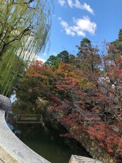 風景,絶景,紅葉,緑,赤,雲,綺麗,晴れ,樹木,岡山,美観地区