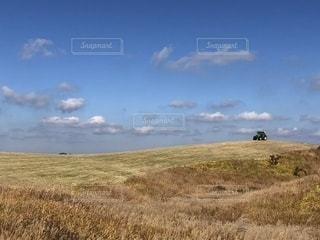 乾いた草のフィールドに立っている人の写真・画像素材[1597701]