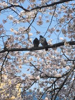 木の枝にとまった鳥の写真・画像素材[1602622]