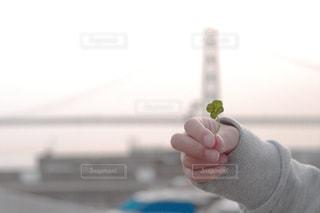 女性,家族,風景,海,花,橋,植物,白,手,子供,女の子,プレゼント,クローバー,贈り物,幸せ,明石海峡大橋,四つ葉,夢,明石海峡,四つ葉のクローバー,兵庫,明石,一葉