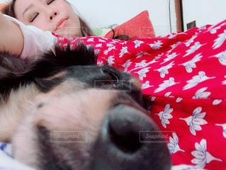 仲良くおやすみの写真・画像素材[1633484]