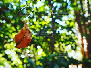 近くの木のアップの写真・画像素材[1649824]