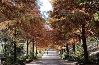 秋,紅葉,兵庫県,鋼の錬金術師ロケ地,播磨中央公園