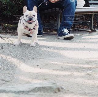 男性,犬,公園,フレンチブルドッグ,散歩,ベンチ,休憩,笑顔