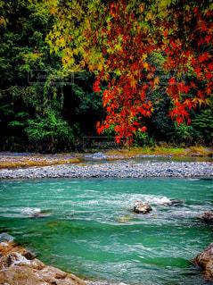 秋,紅葉,東京,川,鮮やか,旅行,休日,ハイキング,のんびり,色彩,コントラスト,多摩川,奥多摩,新鮮な空気,癒される空間