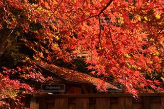 紅葉,カラフル,もみじ