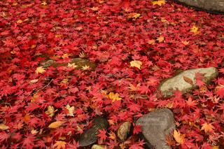 紅葉,カラフル,もみじ,塩原