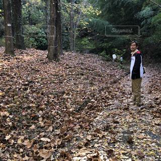 男性,自然,公園,屋外,男,落ち葉,お散歩,草木,旦那さん
