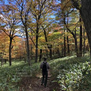 男性,自然,公園,屋外,後ろ姿,男,落ち葉,お散歩,草木,旦那さん