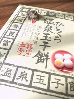 ぴょんちゃん決めポーズの写真・画像素材[1640494]
