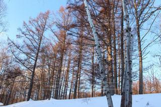 空,木,雪,白,雲,綺麗,青,北海道