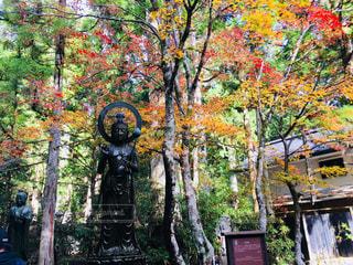 高野山奥の院の写真・画像素材[1623300]
