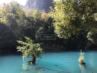 木々 に囲まれた水の体の人々 のグループの写真・画像素材[1686157]