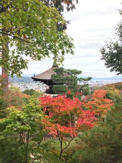 自然,秋,絶景,紅葉,京都,もみじ,11月,モミジ,常寂光寺
