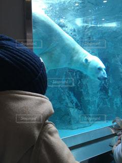 北海道,水槽,旭山動物園,白くま,旭川,白クマ