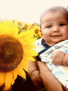 ひまわりと赤ちゃんの写真・画像素材[1825204]