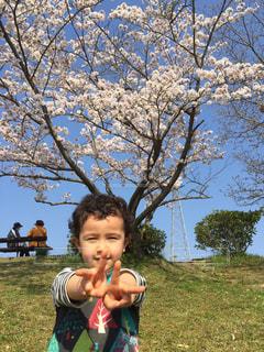 桜と男の子の写真・画像素材[1832837]