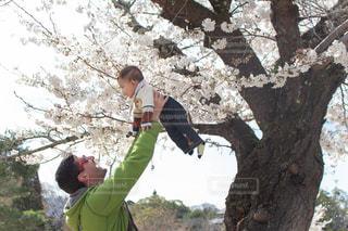 桜の木の下での写真・画像素材[2098090]