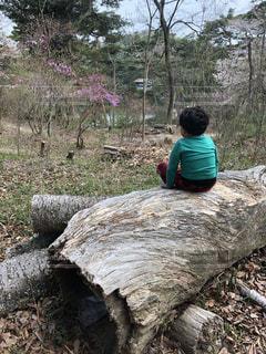 自然,公園,木,屋外,緑,後ろ姿,人物,人,男の子,たそがれ,丸太