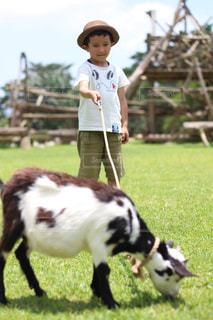 子ヤギとお散歩の写真・画像素材[2260320]