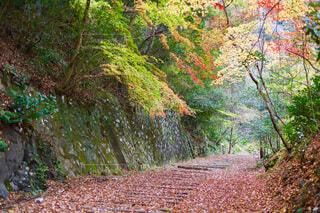 秋の廃線跡の写真・画像素材[3712493]